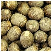 里芋の栽培ポイント
