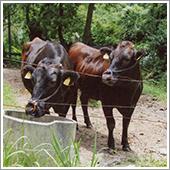 ニオワンダフルで育てる牛は毛艶良く健康で、セリ市でも評価が高く、感謝しております。