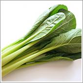 小松菜の栽培方法