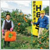HB-101を柿に31年間、使っています。